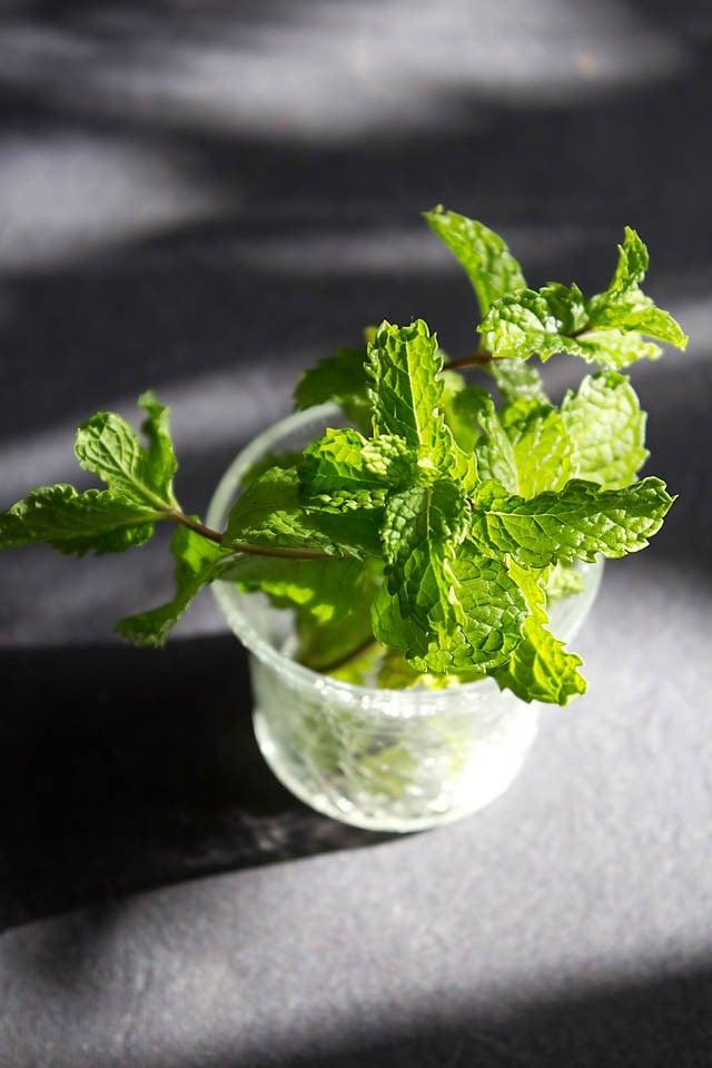 Mint Juice Recipe How To Make Lemon Mint Juice Recipe