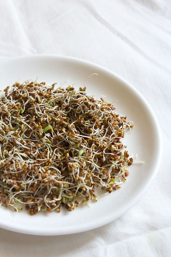 making alfalfa sprouts recipe