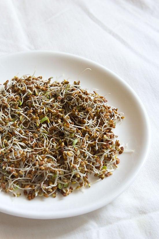 making alfalfa sprouts recipe