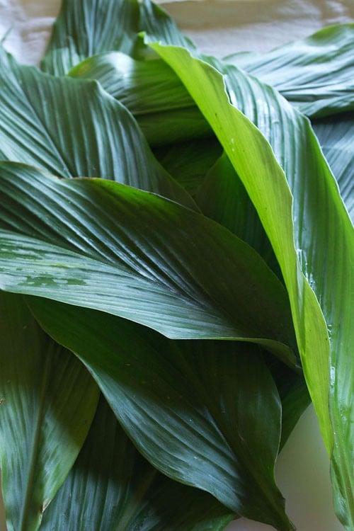 fresh turmeric leaves for patholi