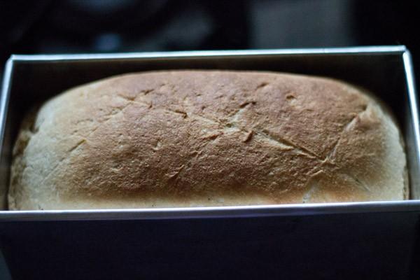 baked - whole wheat bread recipe