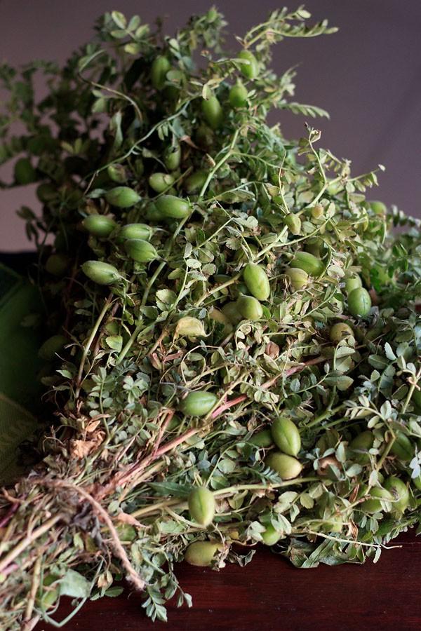 green gram pods, choliya
