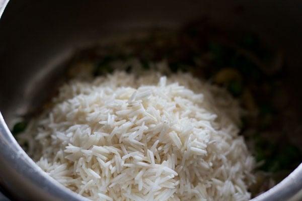preparing coconut milk rice recipe