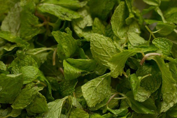 fresh mint leaves or pudina for pudina paratha recipe