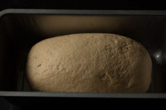 dough for making whole wheat sandwich bread recipe