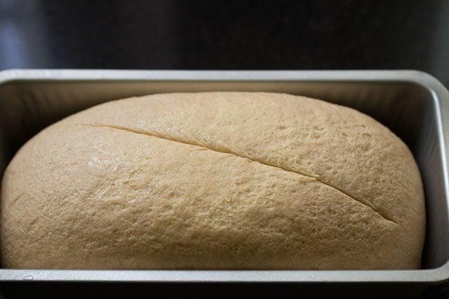 dough for preparing whole wheat sandwich bread recipe