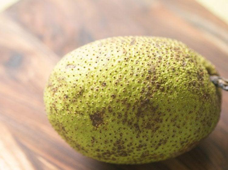 bakri chajhar, neer phanas, jeev kadge, kadachakka, sheema chaaka, seema phanasa, jeegujje, deevi halasu, breadfruit