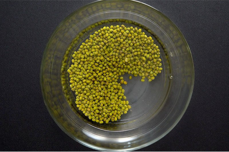mung beans and water in a bowl