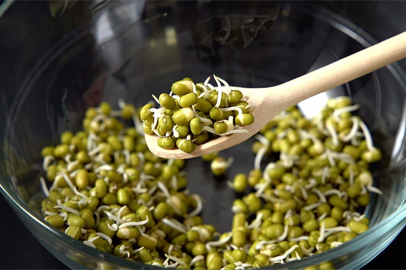 mung bean sprouts scooped in a wooden spoon